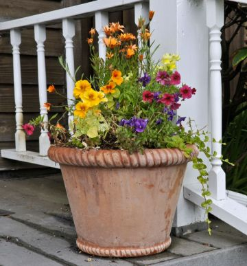 Give Your Old Terra-Cotta Flower Pots a Makeover
